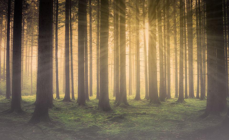 Bild eines Waldes. Sonnenstrahlen fallen durch die Baumkronen. Bildnis zur Meditation.